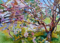 blooming apple trees,buy painting in Kiev
